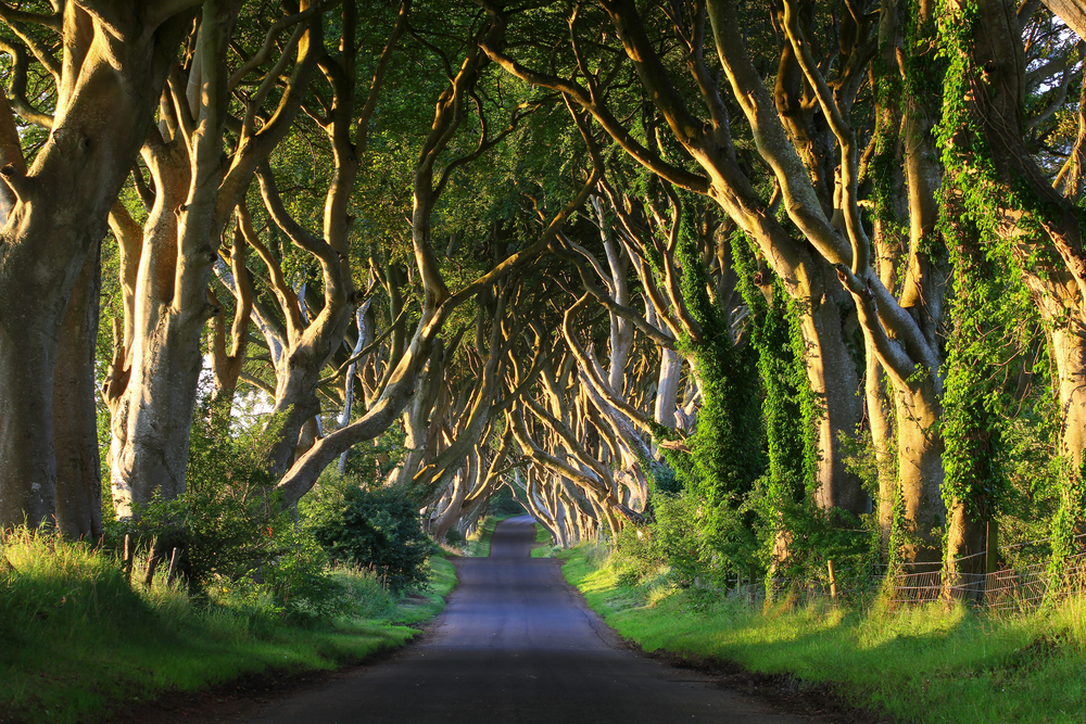 Dark Hedges - Irlanda